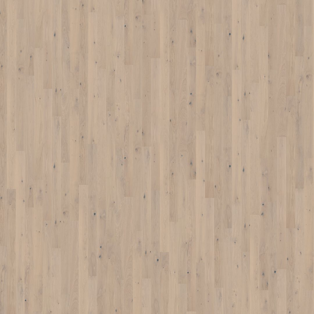 Oak Mostra